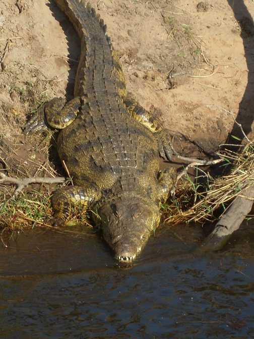 Creepy croc