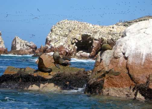 Sea Lion, See Life