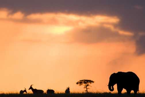 Elephant Sunset