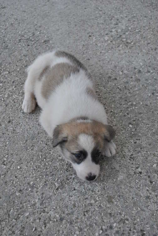 Our guide's puppy- a rescued street dog!