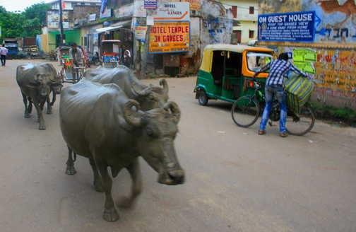 Rush hour - Varanasi