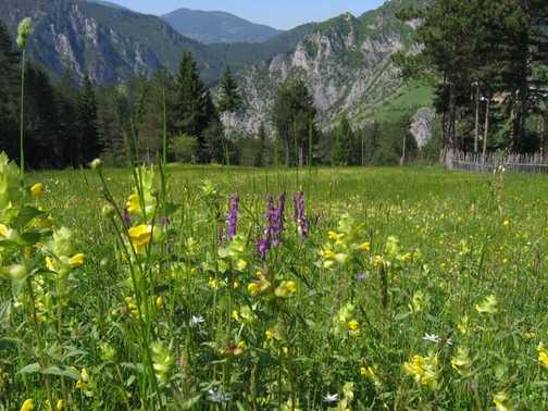 Meadows in Trigrad Gorge