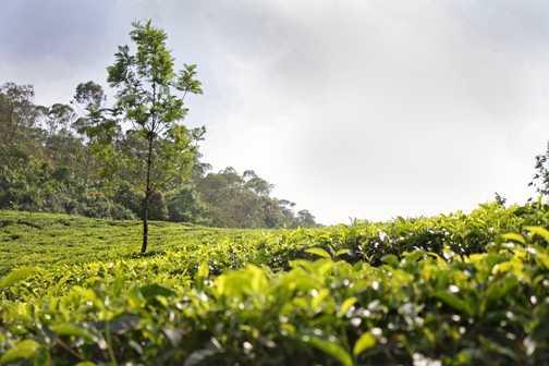 tea, tea everywhere