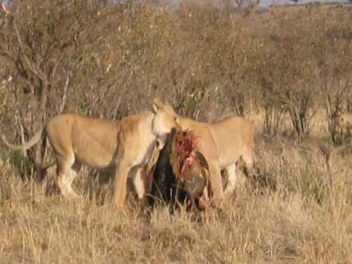 Dinner in the Mara