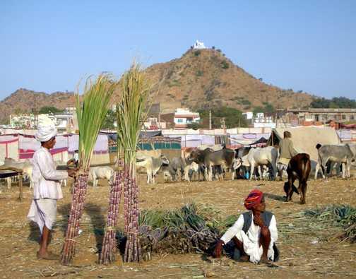Pushkar Camel Fair