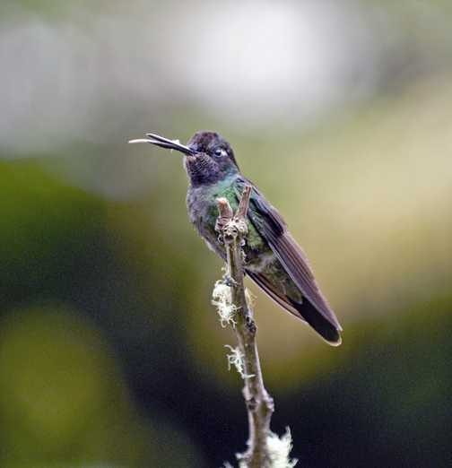Some hummingbirds just have no manners at all.