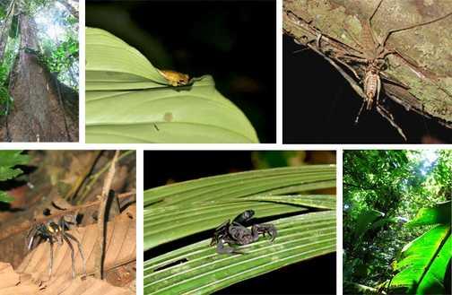 Jungle collage!