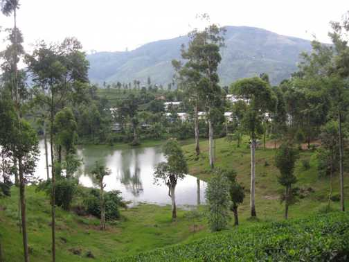 Tea garden/lake view while up in the tea country