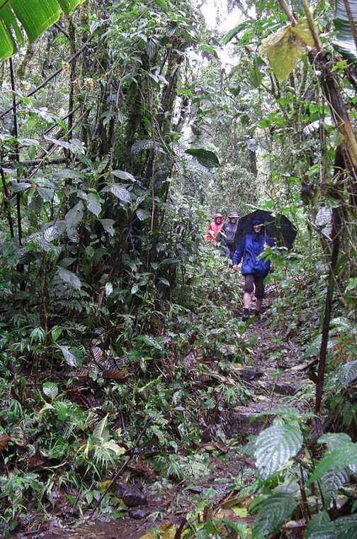 Walking through Santa Elena cloud forest in the pouring rain!