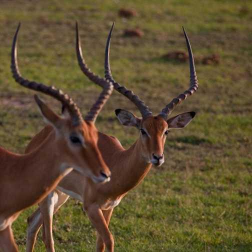 Siblings, Masai Mara