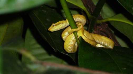 Snake on a Night Hike
