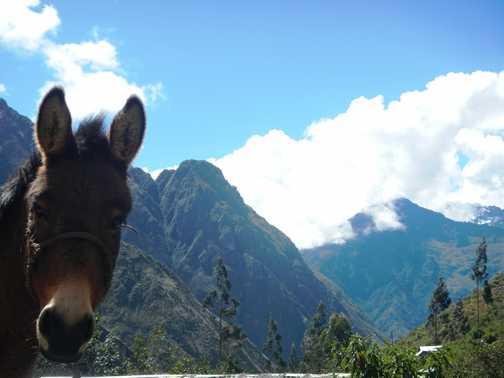 Donkey Hoatie and Mt Veronica.