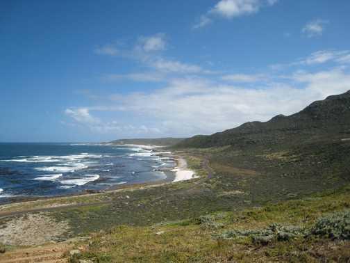 Cape of Good Hope - wildlife