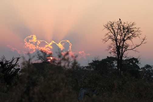 Sunset bushwalk