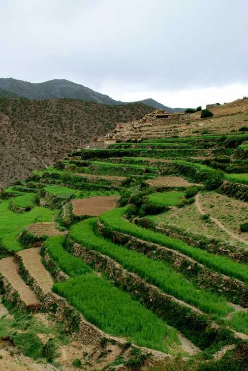 Barley fields in layers
