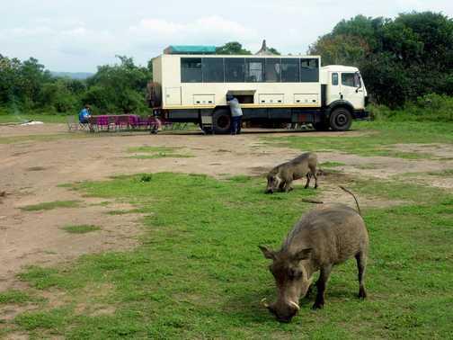 Warthog - Lake Mburo