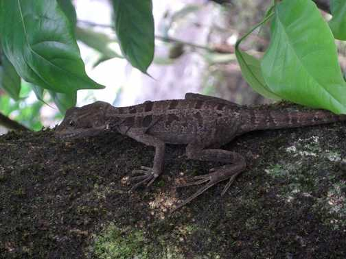 Wildlife at the Laguna Lodge gardens
