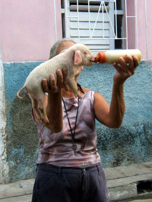 Lady with piglet, Camaguey