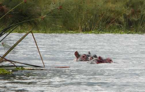 Lake Naivasha ...first signs of wildlife