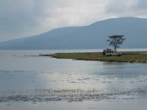 'Sausage' tree, Maasai Mara NP