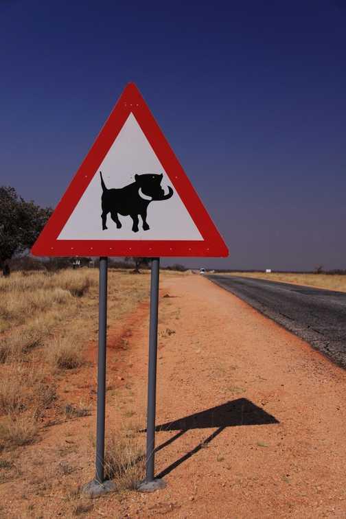 Warthogs!