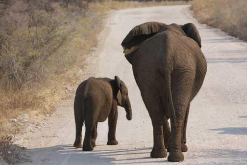 good bye elephants