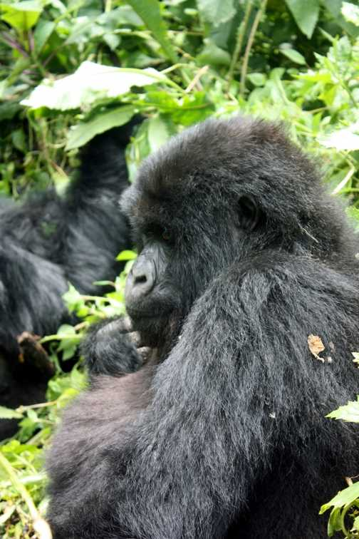 Posing with the gorilla trackers and our guide Hope - Parc National des Volcans