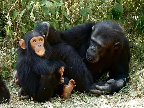 Ol Pejeta Chimp Sanctuary