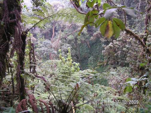 The forest at the base of Kili