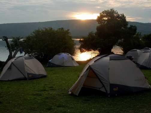 Warthogs in campsite - L Mburo