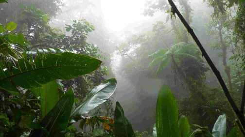 St Elena Cloud Forest