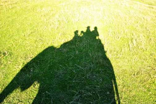 Elephant safari shadow