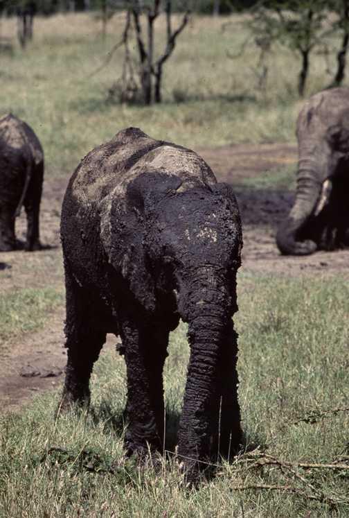 Baby Eli with mud