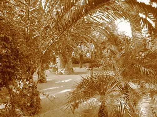 YSL Garden