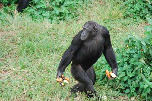 Mgambe Island chimp sanctuary