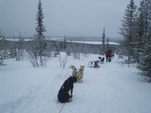 Beautiful view on dog sled route