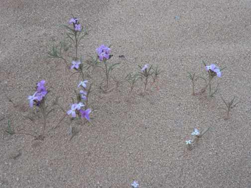 desert flora