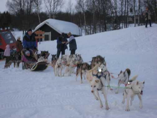 Huskies on the off