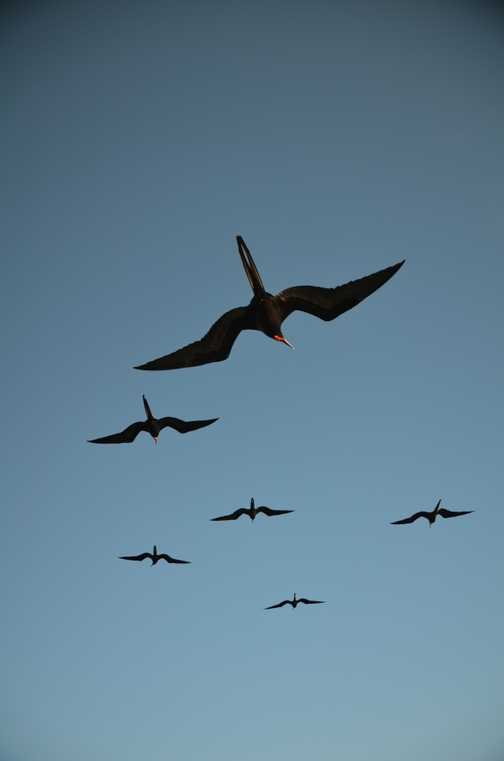 Flight of the Frigates