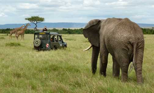 Photographing in the Mara