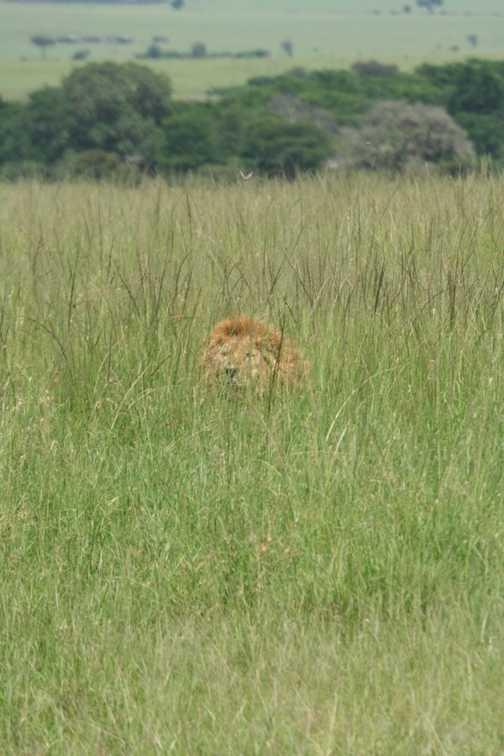 Stalking...