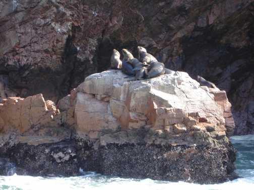 Ballestas Islands