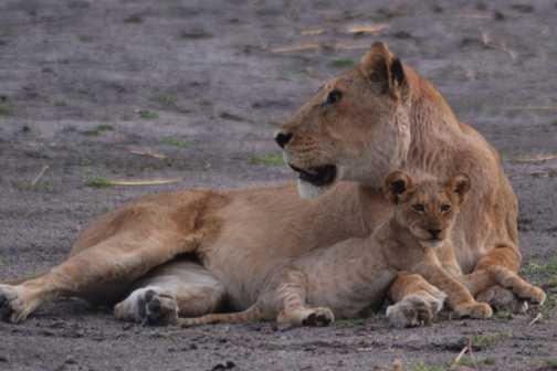 Cub and Mum - Moremi