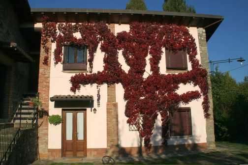 Braccicorti with autumn colours