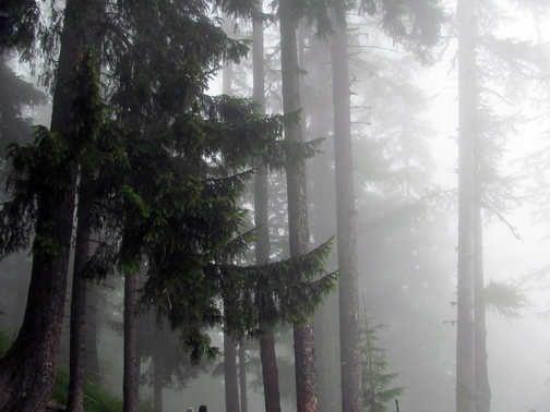 Neil Pittaway the path near Chamonix