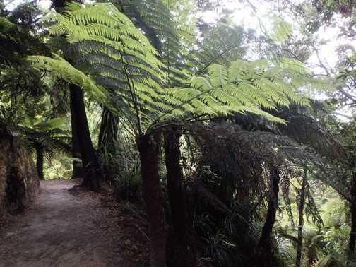 Able Tasman walk