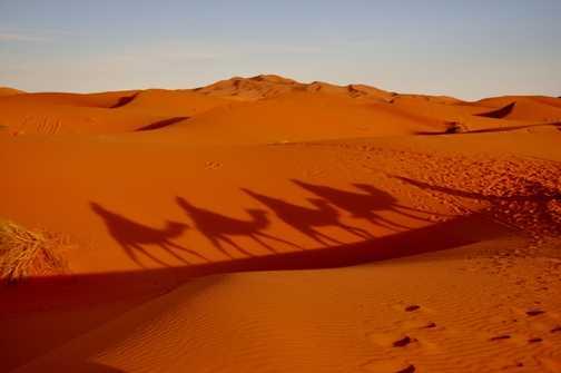 Afternoon camel trek through the desert