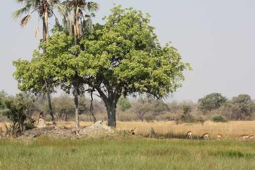 View from Gunn Camp - Okavango Delta