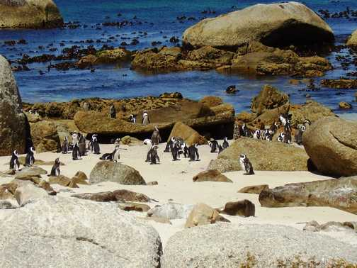 Penguins and images of South Africa