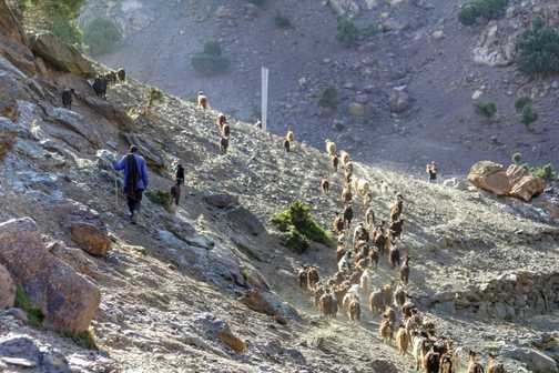 Local shepherds.